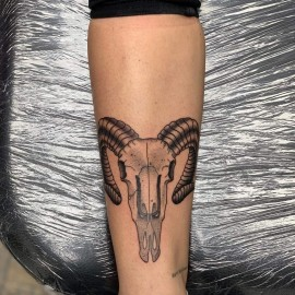 Elefant tattoo intim